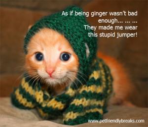 cute ginger kittens