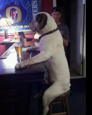 Funny dog drinking at a bar