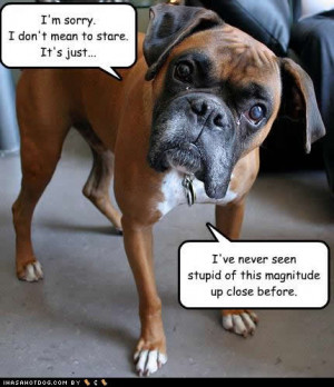 funny-dog-pictures-stupid-magnitude