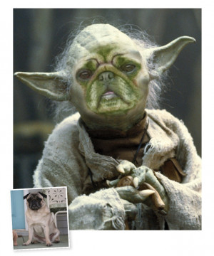 happy birthday yoda quotes star wars yoda meme happy birthday