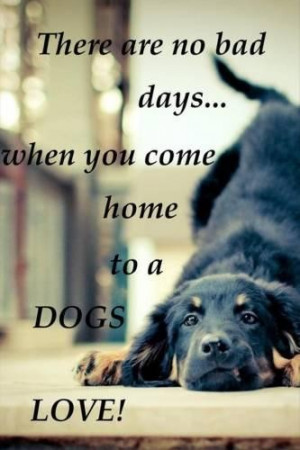 Quotes about dogs and love