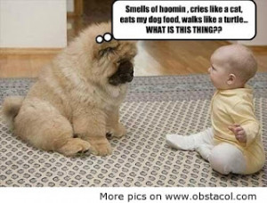 ... quotes best funny family quotes and sayings quotes sayings sayings