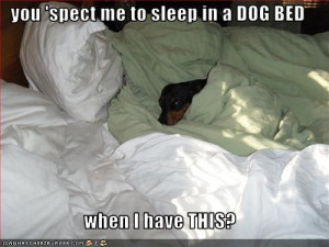 ... dachshund - Page 41 - Loldogs n Cute Puppies - funny dog pictures