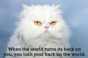 ... likes Disney quotes. Does the internet like cats with Disney quotes