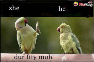 ... funny pictures of difference between female and male birds funny