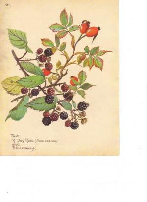 ... 131 Fruit Dog Rose Blackberries Branch Berry Decoupage Image via Etsy