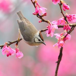 Spring - Easter flowers