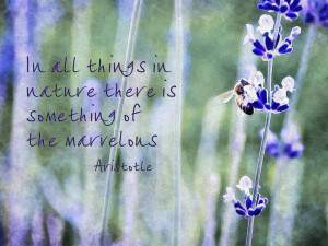 Bee And Lavender With Quote Photograph