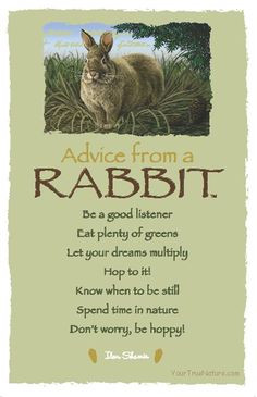 Advice from a rabbit. Be a good listener. Eat plenty of greens. Let ...