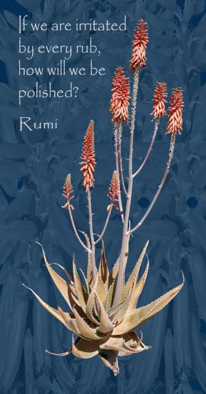 Aloe Vera with Rumi Quote
