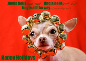 funny dog christmas cards