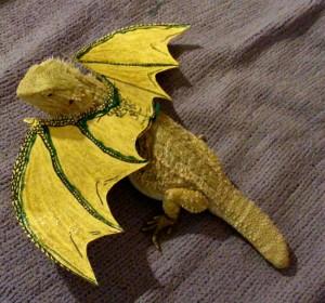 bearded dragon halloween costume
