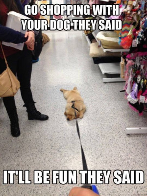 funny-picture-shopping-with-dog