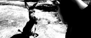 Donkey (Eddie Murphy) and Shrek (Mike Myers) (1)