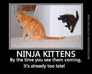 funny-cat-pics-ninja-kittens