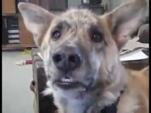 Love this Talking Dog Video!