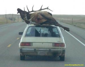 Funny Elk Hunting Jokes Deer hunting f... funny elk