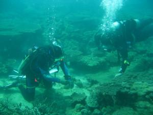 Click to enlarge image marine_conservation-6.jpeg