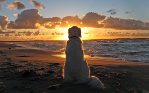 Dog on Beach – Image: Source