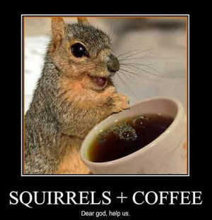 ... , animals humor, crazy animals scraps, funny cat, funny squirrel pics