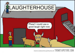 Funny photos funny cows slaughter house