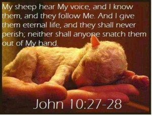 my sheep know my voice. what a lovely picture depicting this verse ...