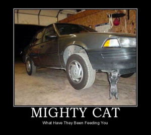 car-humor-funny-joke-road-street-driver-mighty-cat