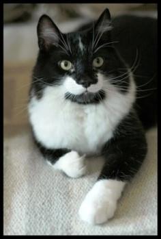 Responsible Pet Ownership Blog