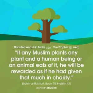 charity in islam Importance of zakat the compulsory charity-third pillar of islam  zakat is the third pillar of islam and compulsory on every financially stable muslim that is.
