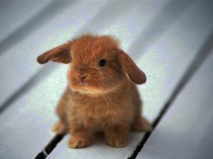 angry, blackberry, bunny, cute, rabbit