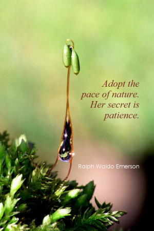 ... the pace of nature. Her secret is patience. - Ralph Waldo Emerson