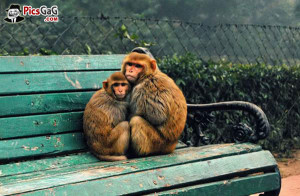 incoming search terms cute monkey love quotes monkey love wallpaper