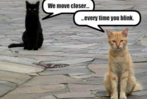 funny moving pictures
