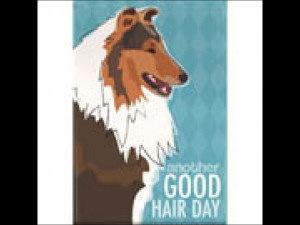Collie Good Hair Day Magnet