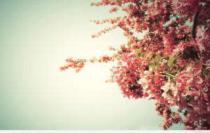 spring-tree-blossoms-flower-hd-wallpaper-1920x1200-8909