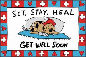 Cute dog get well soon graphic