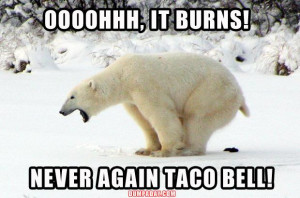 funny taco bell, polar bear taking a dump