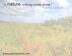 Rachel Carson Quote: Nothing Exists Alone