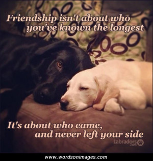 Dog Quotes About Friendship