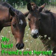 Equine Spot - Celebrating the Joy of Horses
