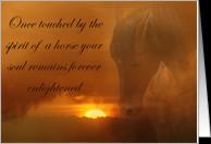 Horse Pet Sympathy Cards