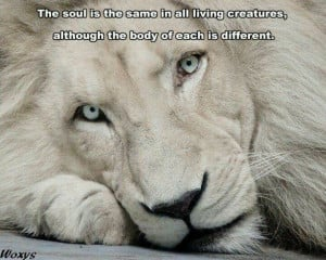 : Lion Quotes And Sayings , Lion Love Black And White , Lion Quotes ...