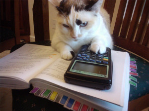 Silly cat, that's clearly a TI-83. It doesn't even do symbolic ...