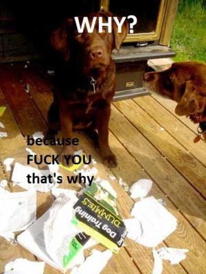 Funny photos funny dog book training