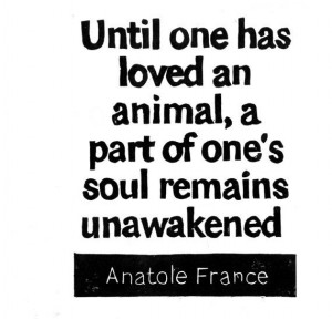 LINOCUT PRINT - Anatole France Quote - Until one has loved an animal ...