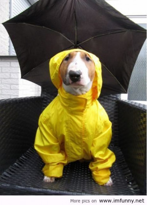 Ready for the rain / Funny Pictures, Funny Quotes – Photos, Quotes ...