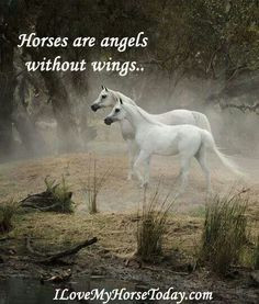 ... at these gorgeous Arabian horses with a beautiful quote. So true