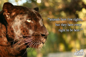 Wild Animal, Big Cats, Life, Big Cat Rescue, Animal Quotes, Animal ...