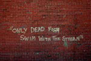 Wallpaper: Quotes-Only Dead fish wallpapers