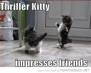 dancing cat kitten lolcat animal thriller impress friends funny pics ...
